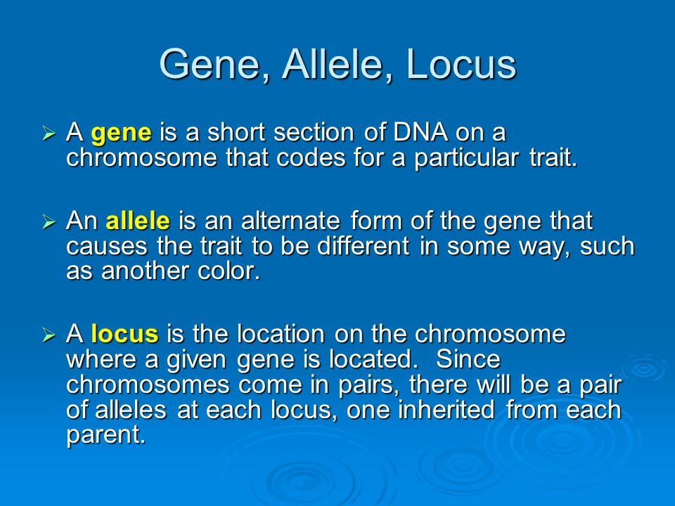 Gene, Allele, Locus  A gene is a short section of DNA on a chromosome that codes for a particular trait.