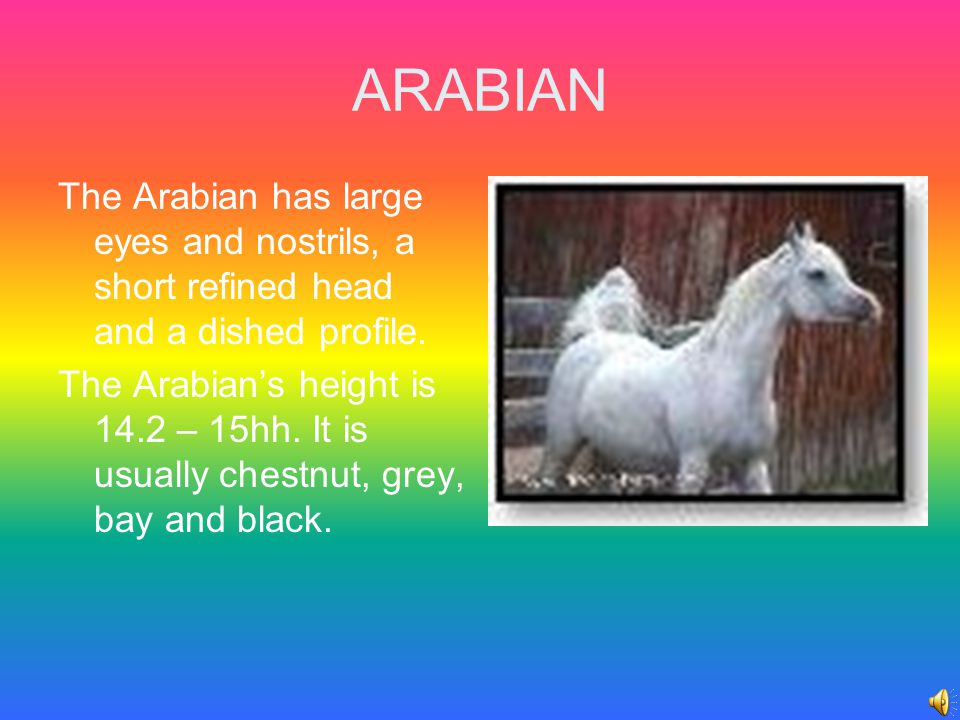 ARABIAN The Arabian is the oldest and the purest of all horse breeds.