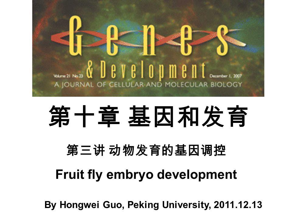 第十章 基因和发育 By Hongwei Guo, Peking University, 2011.12.13 第三讲 动物发育的基因调控 Fruit fly embryo development