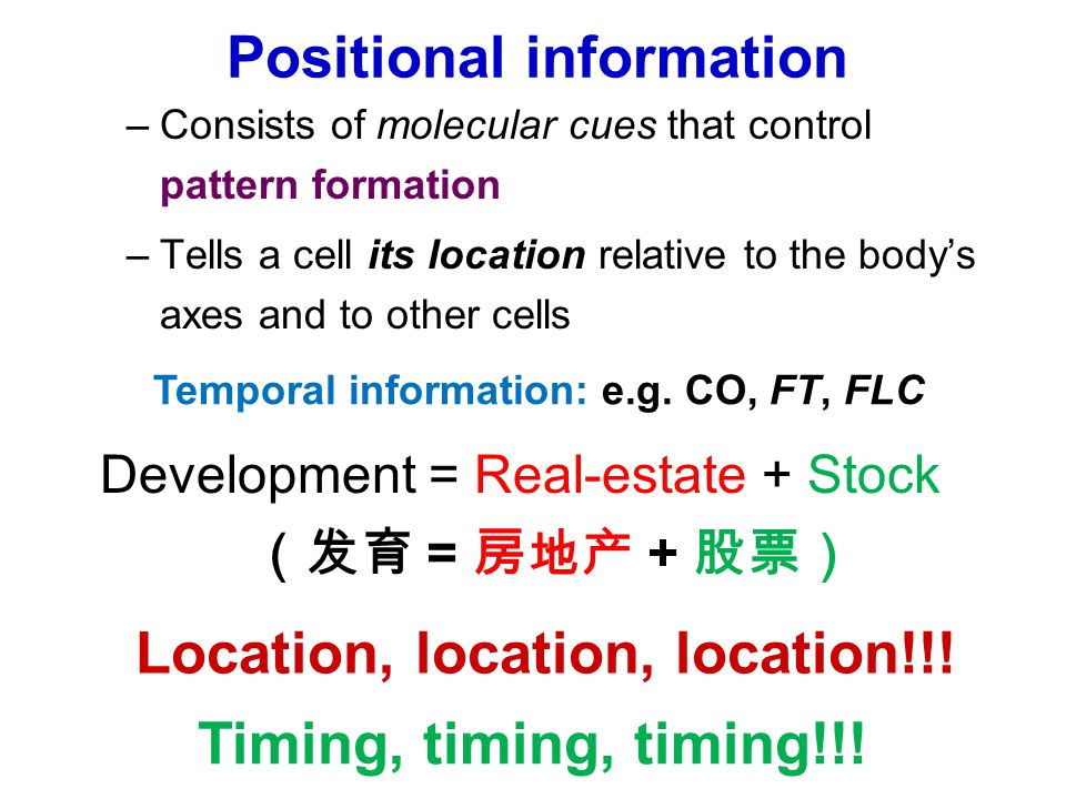 Positional information –Consists of molecular cues that control pattern formation –Tells a cell its location relative to the body's axes and to other cells Location, location, location!!.