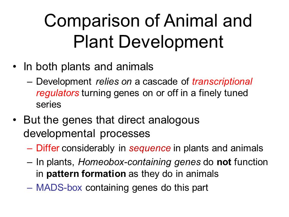 Comparison of Animal and Plant Development In both plants and animals –Development relies on a cascade of transcriptional regulators turning genes on or off in a finely tuned series But the genes that direct analogous developmental processes –Differ considerably in sequence in plants and animals –In plants, Homeobox-containing genes do not function in pattern formation as they do in animals –MADS-box containing genes do this part