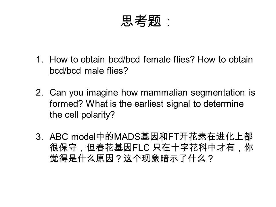 思考题: 1.How to obtain bcd/bcd female flies. How to obtain bcd/bcd male flies.