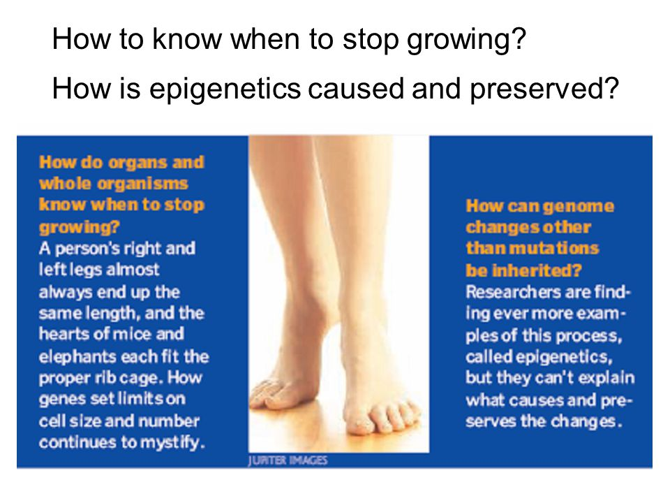 How to know when to stop growing How is epigenetics caused and preserved
