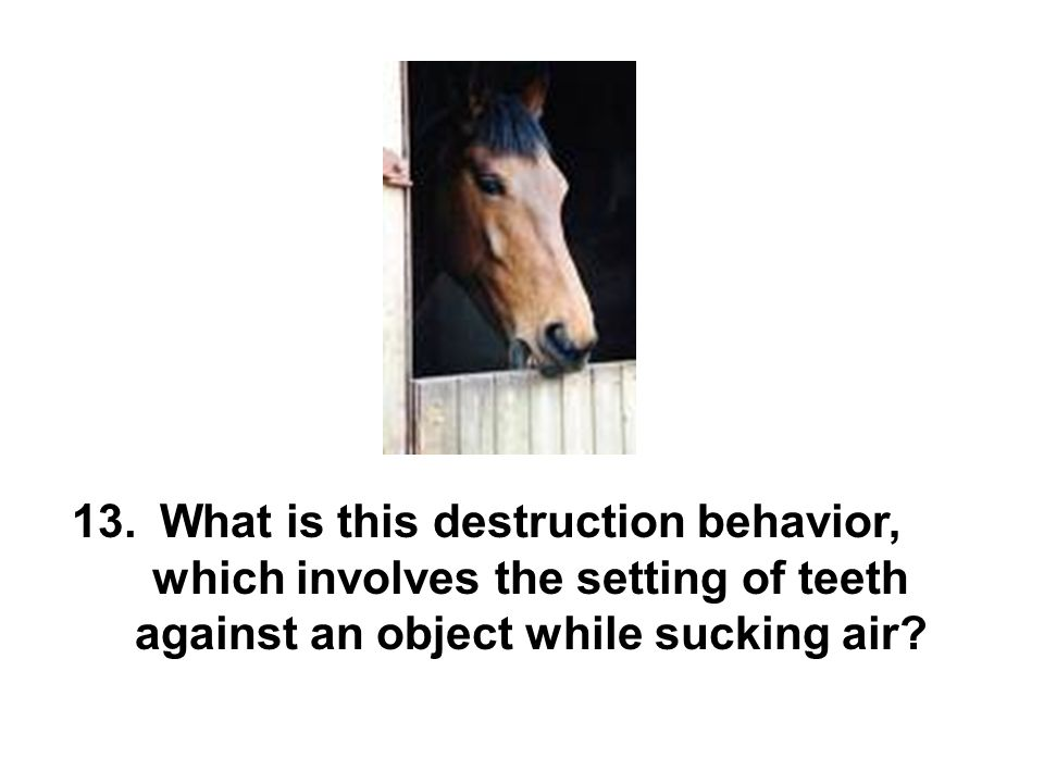 What is this destruction behavior, which involves the setting of teeth against an object while sucking air.
