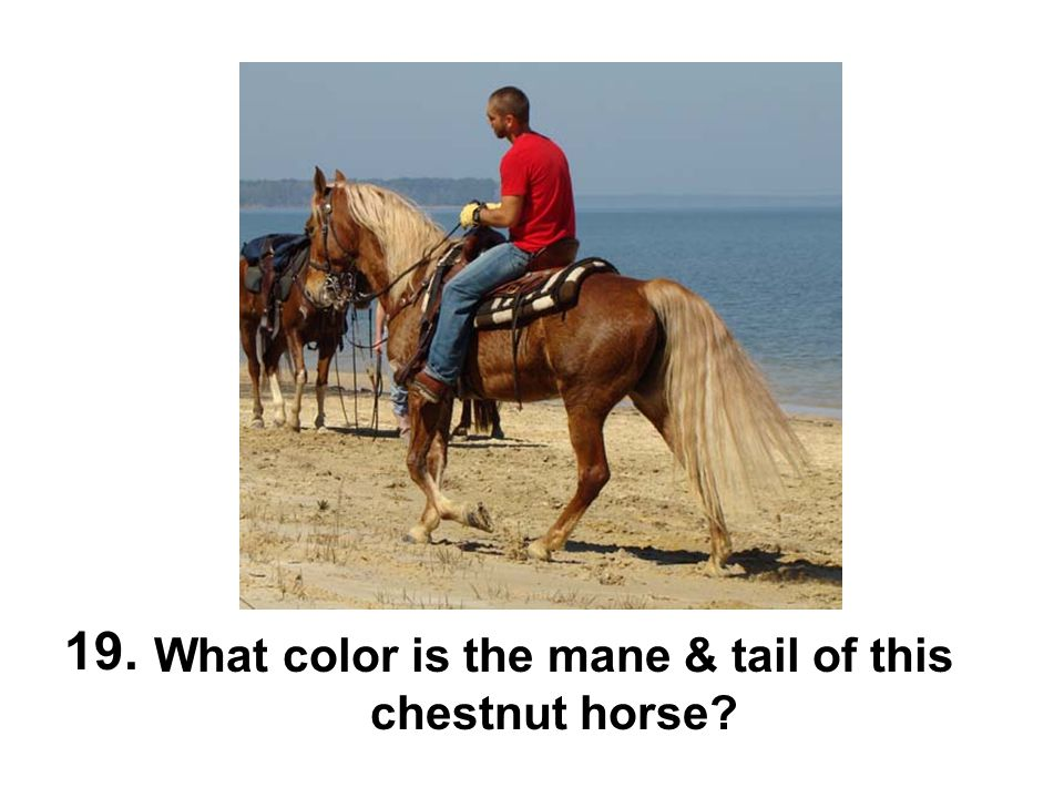 What color is the mane & tail of this chestnut horse? 19.