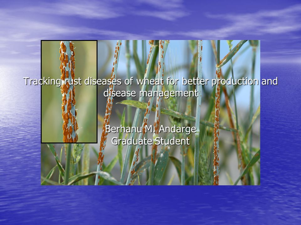 Tracking rust diseases of wheat for better production and disease management Berhanu M.