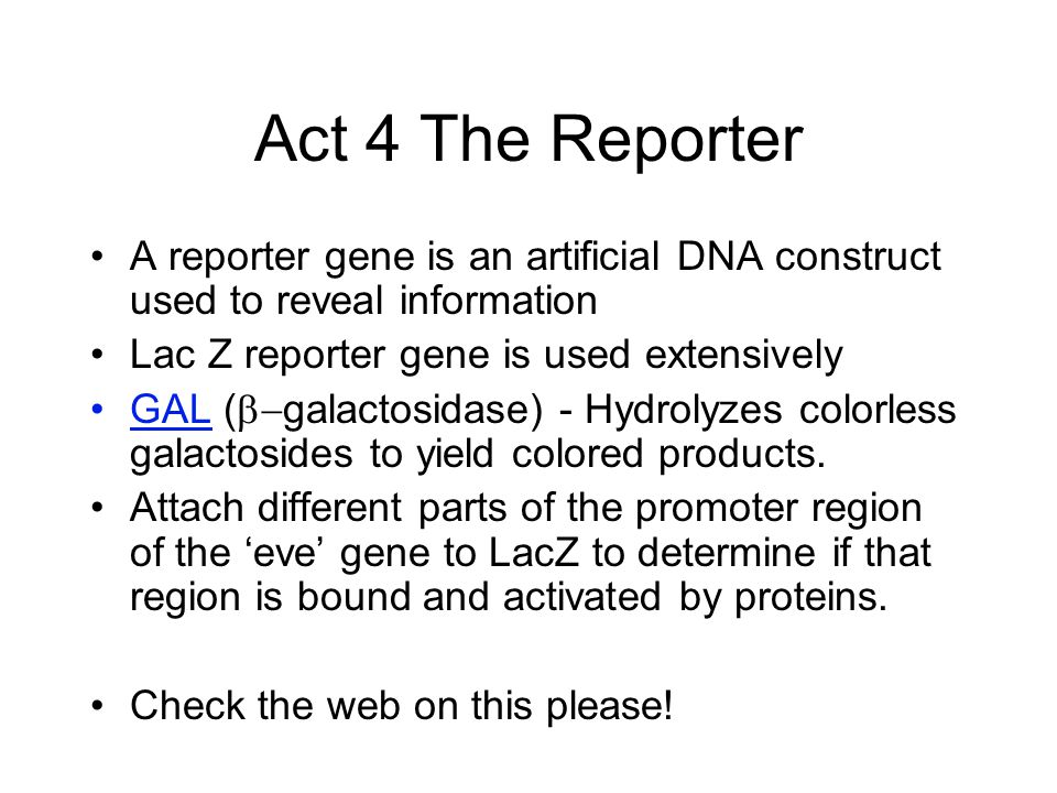 Act 4 The Reporter A reporter gene is an artificial DNA construct used to reveal information Lac Z reporter gene is used extensively GAL (  galactosidase) - Hydrolyzes colorless galactosides to yield colored products.