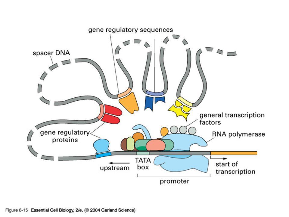 08_15_Reg. proteins.jpg