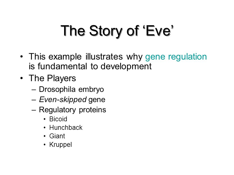 The Story of 'Eve' This example illustrates why gene regulation is fundamental to development The Players –Drosophila embryo –Even-skipped gene –Regulatory proteins Bicoid Hunchback Giant Kruppel