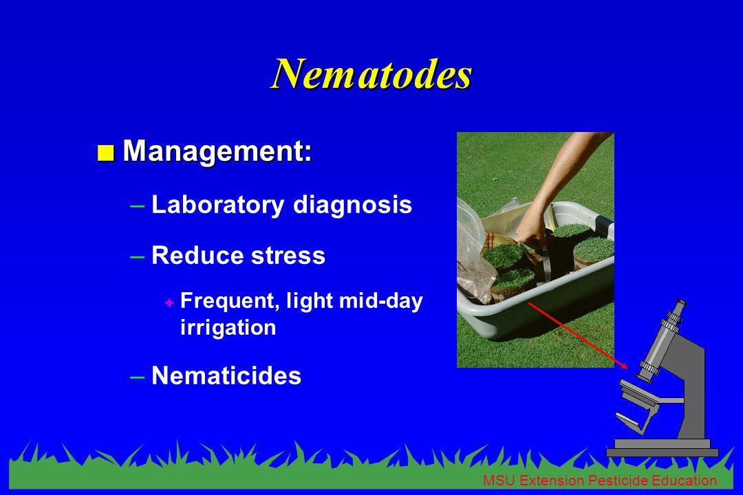 MSU Extension Pesticide Education Nematodes n Management: –Laboratory diagnosis –Reduce stress F Frequent, light mid-day irrigation –Nematicides