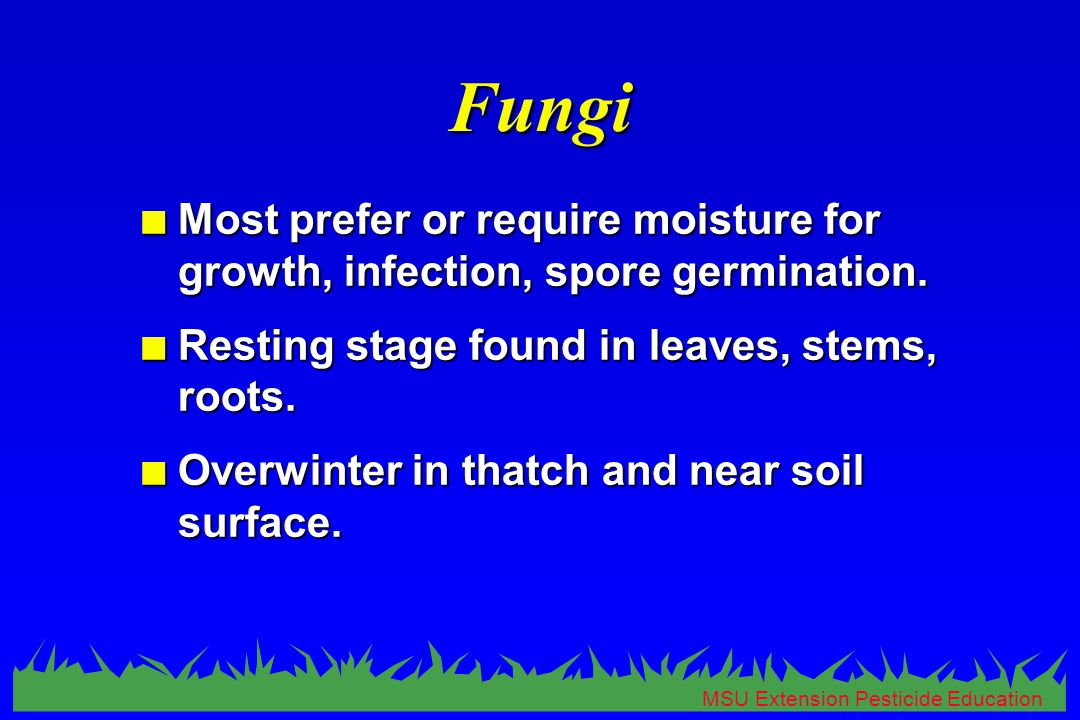 MSU Extension Pesticide Education Fungi n Most prefer or require moisture for growth, infection, spore germination.