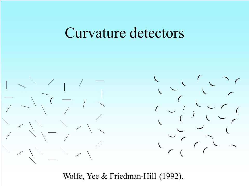 Curvature detectors ( ( ( ( ( ( ( ( ( ( ( ( ( ( ( ( ( ( ( ( ( ( ( ( ( ( ( ( ( ( ( ( ( ( ( ( ( Wolfe, Yee & Friedman-Hill (1992).