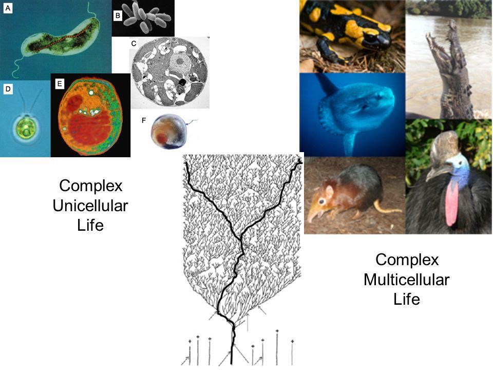 Complex Unicellular Life Complex Multicellular Life
