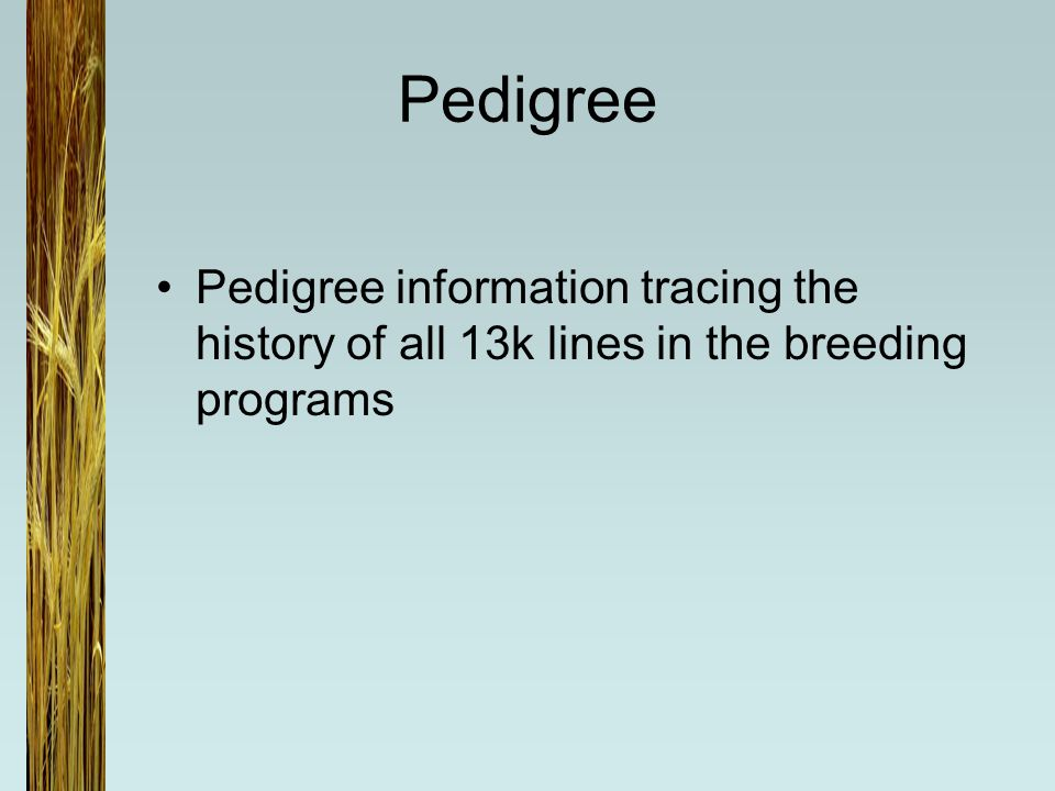 Pedigree Pedigree information tracing the history of all 13k lines in the breeding programs