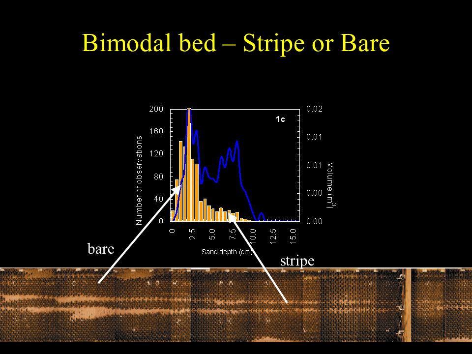 Bimodal bed – Stripe or Bare stripe bare