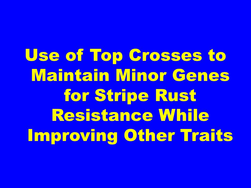 Use of Top Crosses to Maintain Minor Genes for Stripe Rust Resistance While Improving Other Traits