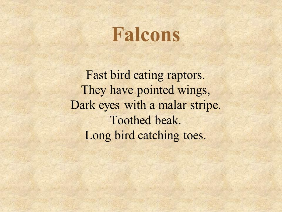 Falcons Fast bird eating raptors. They have pointed wings, Dark eyes with a malar stripe.