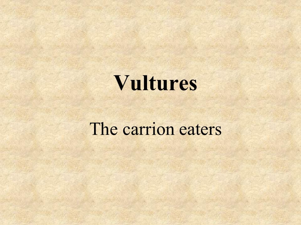 Vultures The carrion eaters