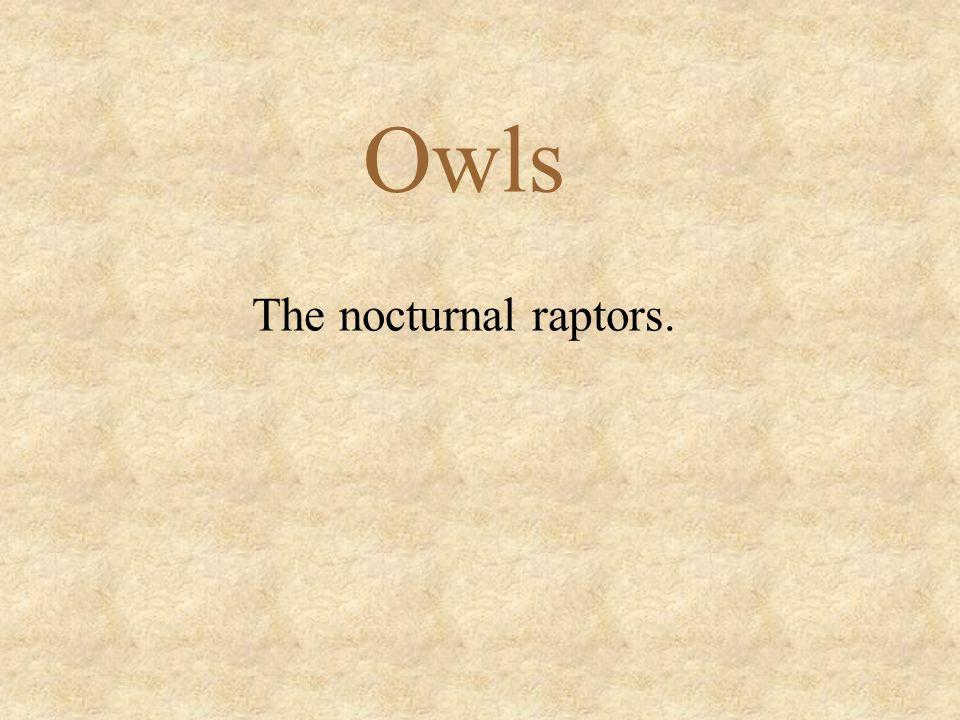 Owls The nocturnal raptors.