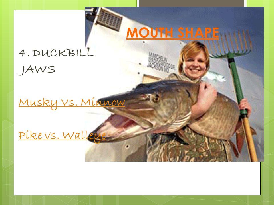 Duckbill Pike…