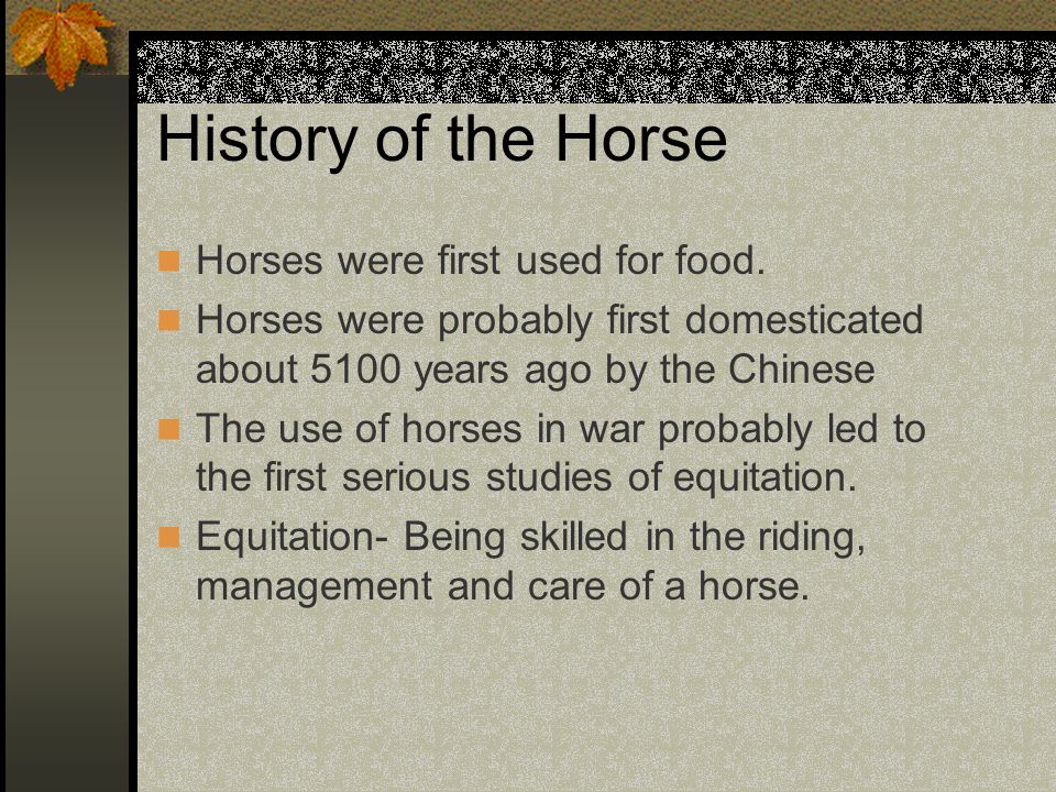 History of the Horse Horses were first used for food.
