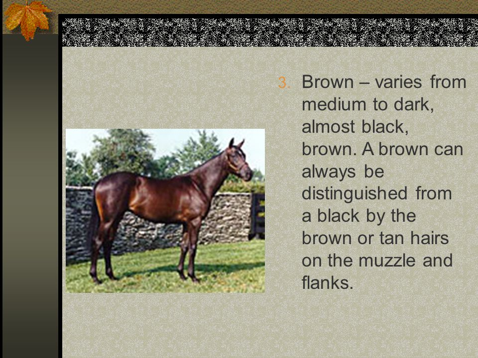 3.Brown – varies from medium to dark, almost black, brown.