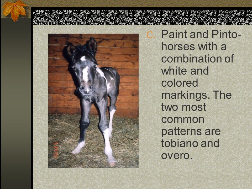 C.Paint and Pinto- horses with a combination of white and colored markings.