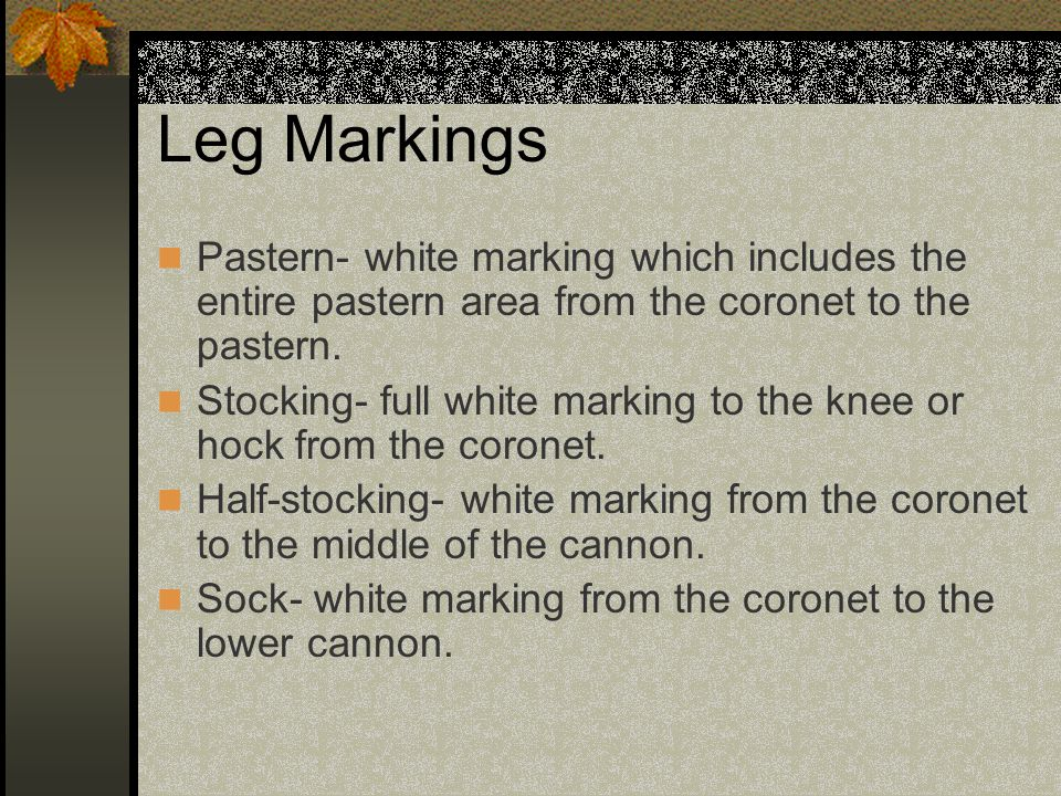 Leg Markings Pastern- white marking which includes the entire pastern area from the coronet to the pastern.