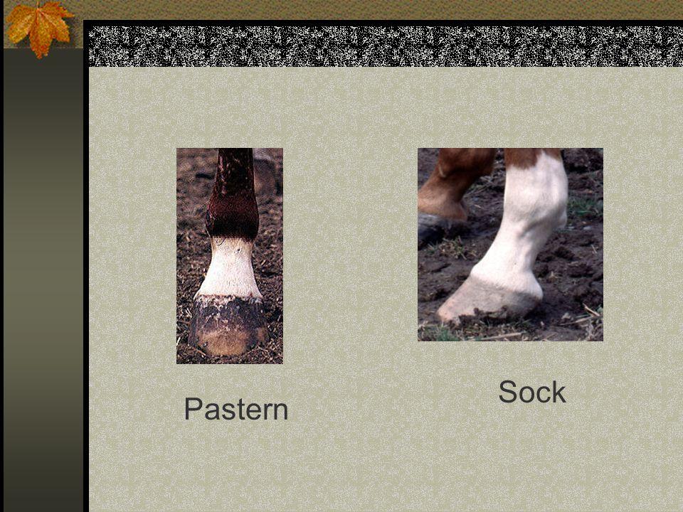 Sock Pastern