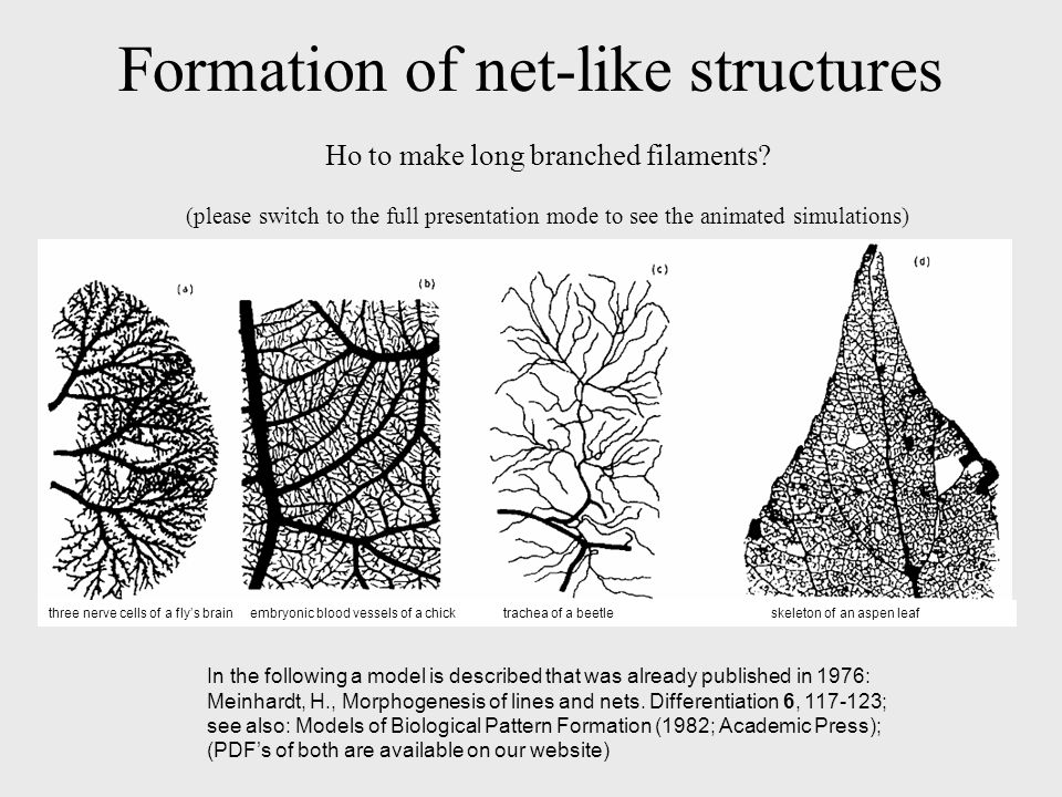 Formation of net-like structures Ho to make long branched filaments.