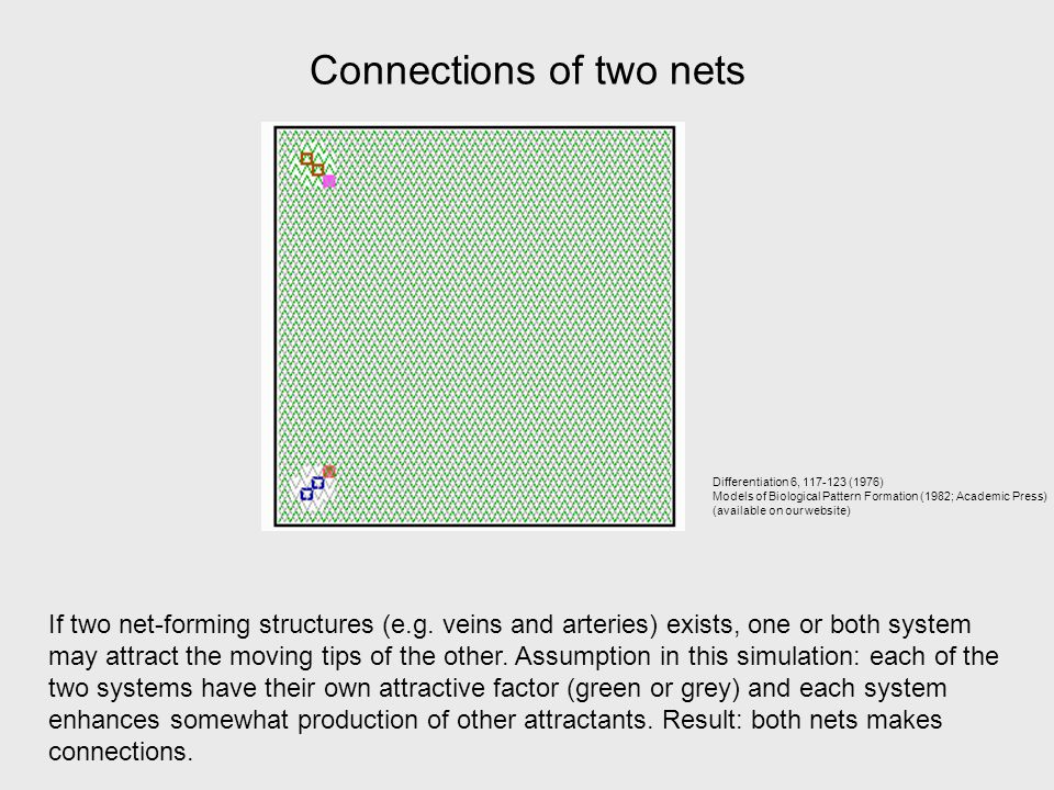 Connections of two nets If two net-forming structures (e.g.
