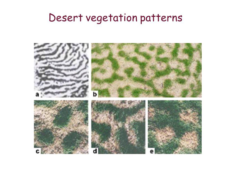 Desert vegetation patterns