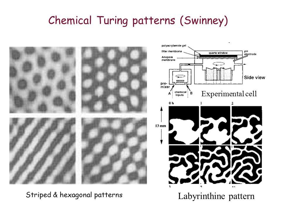 Patterns of vibrating sand (Swinney)