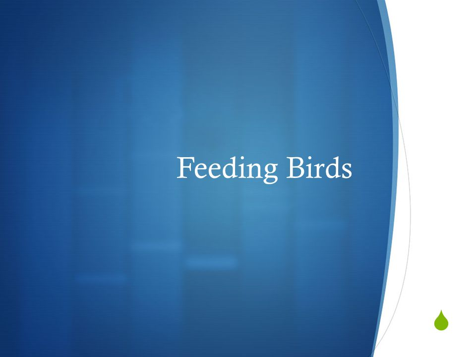 Bird Feeder  Ground  Large Hopper  Large Tube Feeder  Nectar Feeder  Platform  Small Hopper  Small Tube Feeder  Suet Cage
