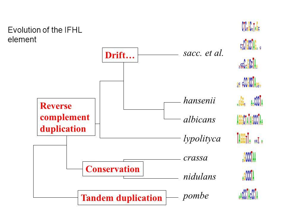 Evolution of the IFHL element pombe nidulans crassa lypolityca albicans hansenii sacc.