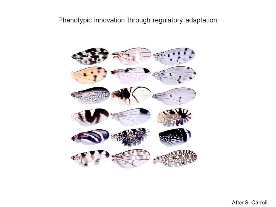 After S. Carroll Phenotypic innovation through regulatory adaptation