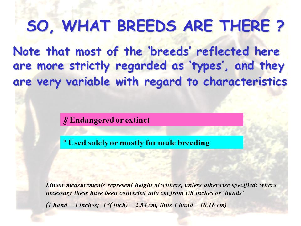 SO, WHAT BREEDS ARE THERE ? Linear measurements represent height at withers, unless otherwise specified; where necessary these have been converted int