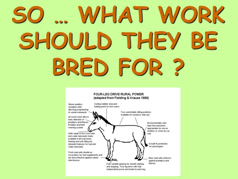 SO … WHAT WORK SHOULD THEY BE BRED FOR ?
