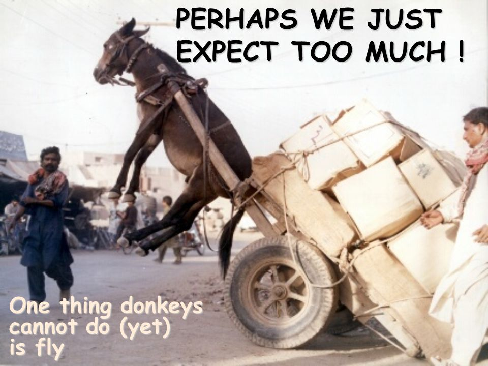 PERHAPS WE JUST EXPECT TOO MUCH ! One thing donkeys cannot do (yet) is fly