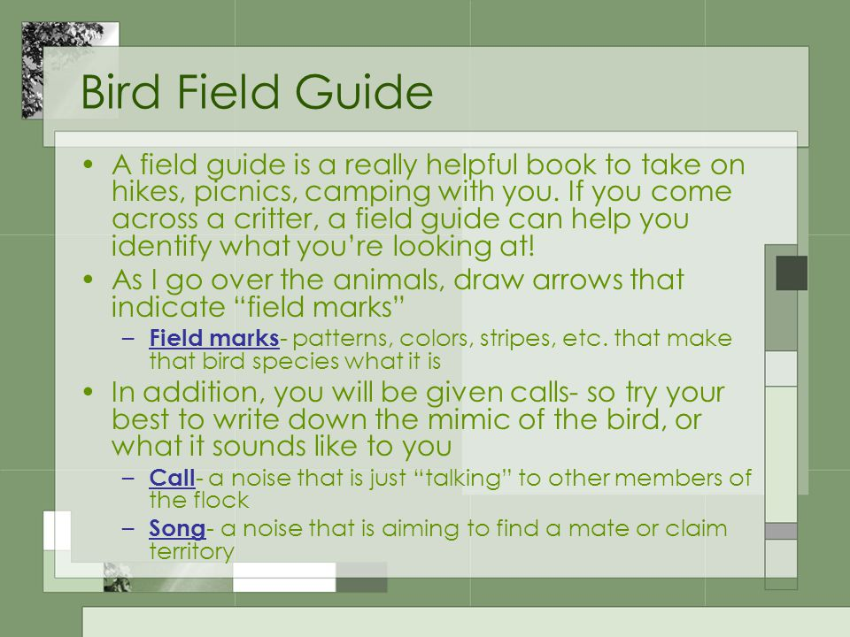 Bird Field Guide A field guide is a really helpful book to take on hikes, picnics, camping with you.