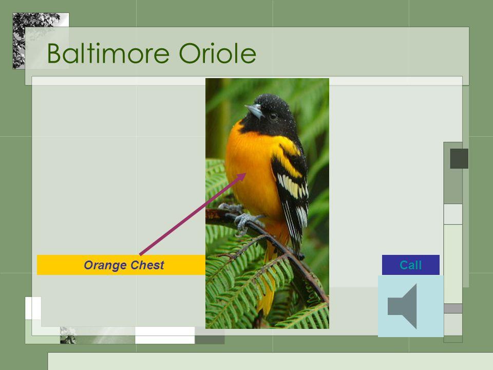 Baltimore Oriole Orange ChestCall