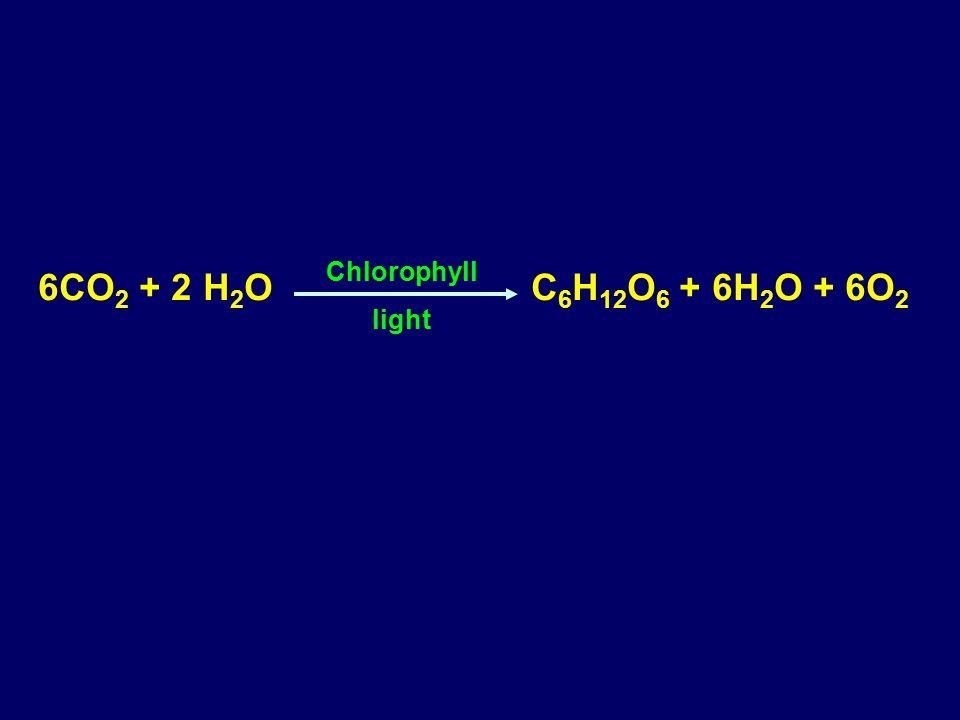 6CO 2 + 2 H 2 O C 6 H 12 O 6 + 6H 2 O + 6O 2 Chlorophyll light