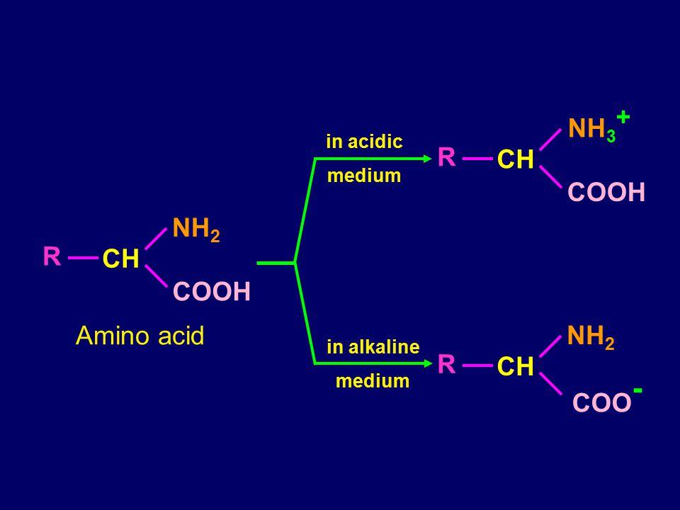 CH R NH 3 + COOH CH R NH 2 COO - in acidic medium in alkaline medium CH R NH 2 COOH Amino acid