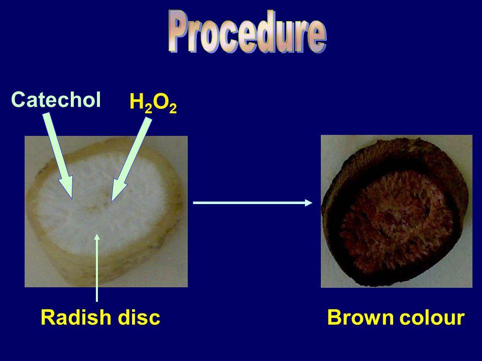 Radish disc Catechol H2O2H2O2 Brown colour