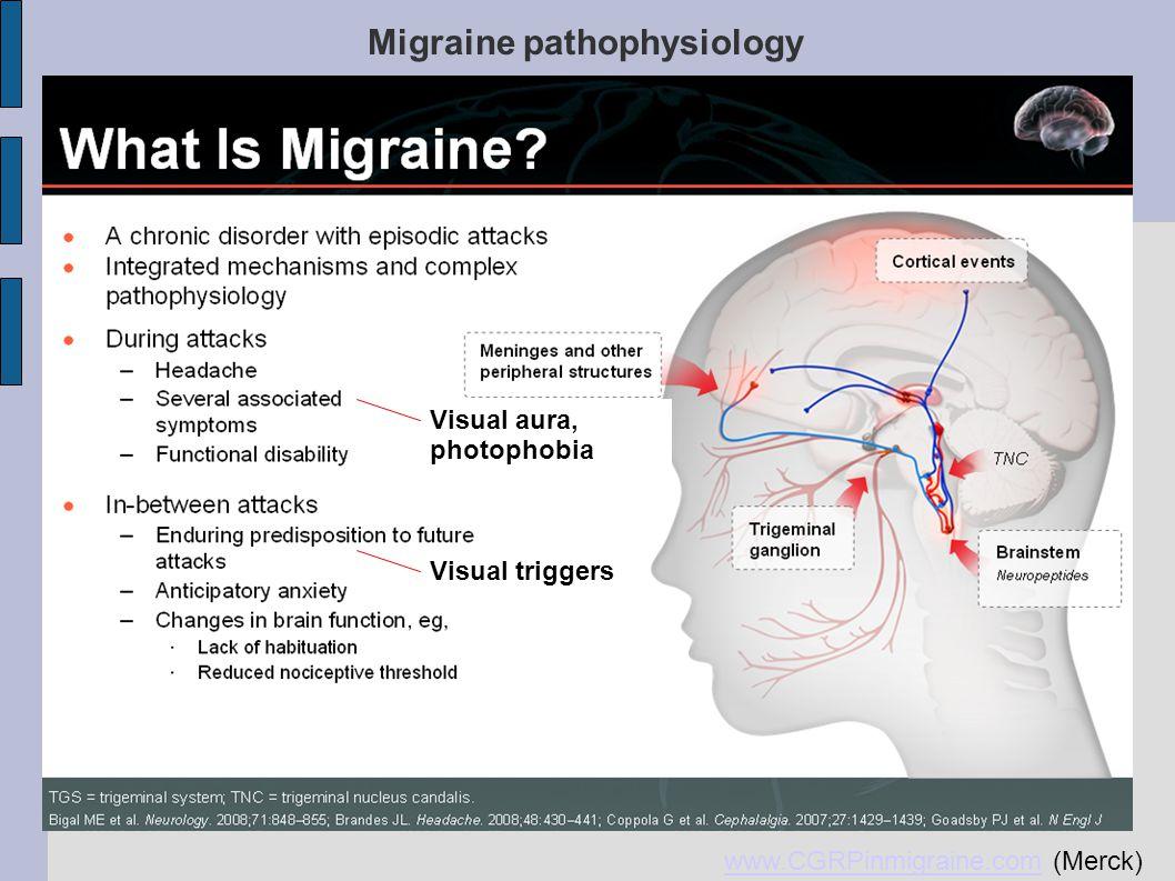 Migraine pathophysiology- cortical excitability www.CGRPinmigraine.comwww.CGRPinmigraine.com (Merck) Migraine pathophysiology Visual aura, photophobia