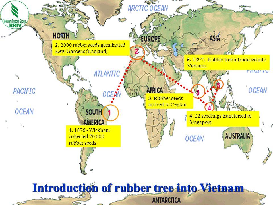 Rubber cultivation area in Vietnam