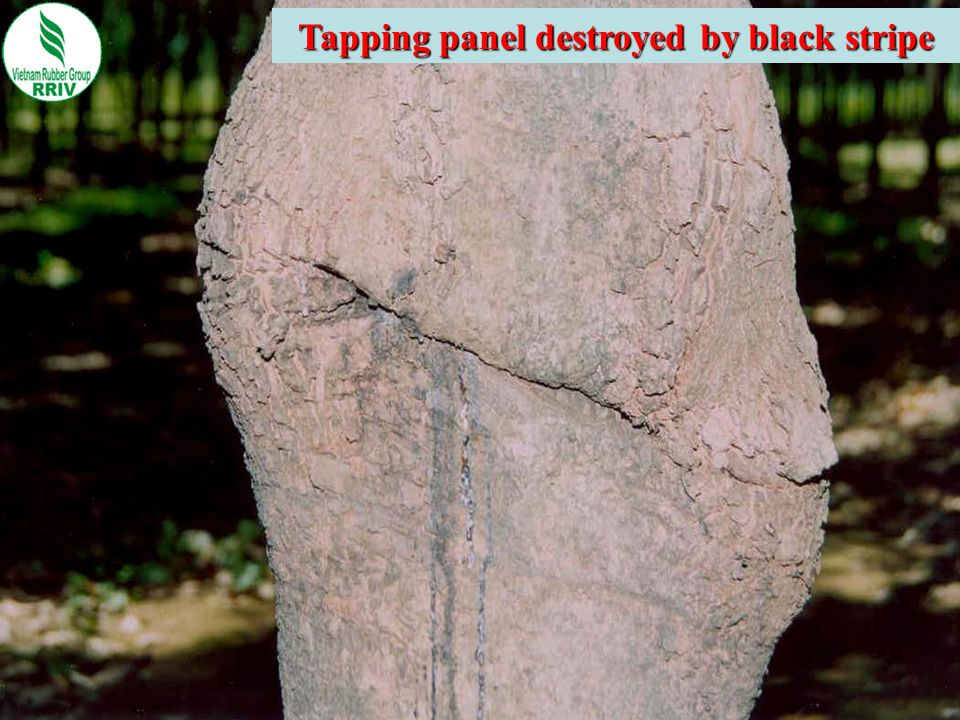 Tapping panel destroyed by black stripe
