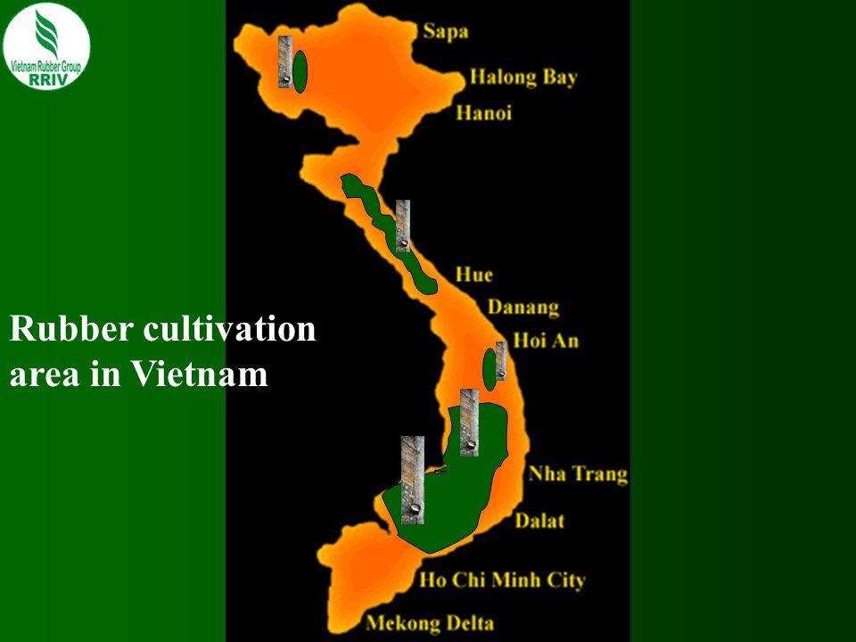 RUBBER AREA UNDER CULTIVATION 1897 Introduction of rubber tree 1906 First rubber estate established 1920 7.077 ha 1945 138.400 ha 1975 75.200 ha 2006 490.200 ha 2007 549.600 ha