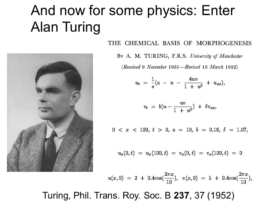 And now for some physics: Enter Alan Turing Turing, Phil. Trans. Roy. Soc. B 237, 37 (1952)
