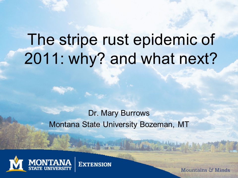 The stripe rust epidemic of 2011: why? and what next? Dr. Mary Burrows Montana State University Bozeman, MT